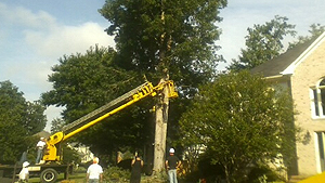 Tree Canopy Pruning